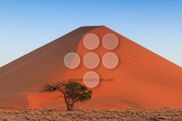 Spectacular red sanddune centered sunset Sossusvlei – Popular Stock Photos