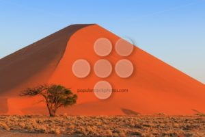 Spectacular red sanddune close up sunset Sossusvlei - Popular Stock Photos