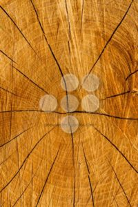 Texture cut tree trunk - Popular Stock Photos