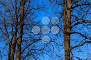 Trees without leafs autumn sky sundown - Popular Stock Photos