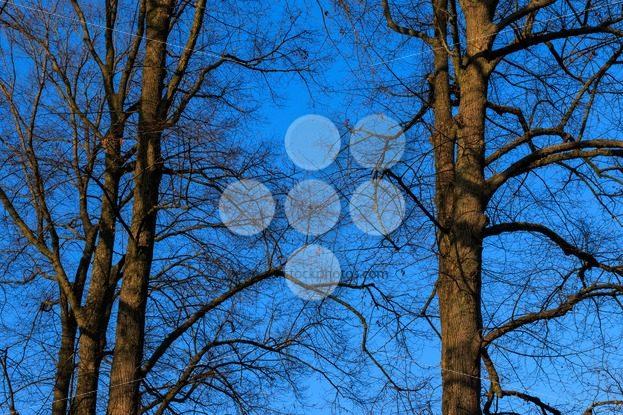 Trees without leafs autumn sky sundown – Popular Stock Photos