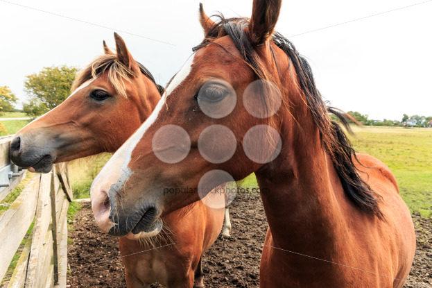 Two horses near fence – Popular Stock Photos