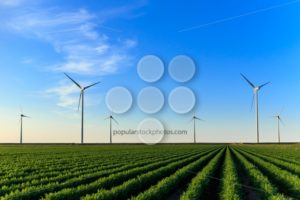 Windmills at field of crops - Popular Stock Photos