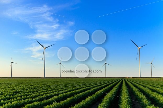 Windmills at field of crops – Popular Stock Photos