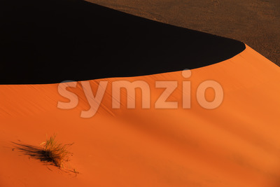 Edge red sanddune Sossusvlei vegetation Stock Photo