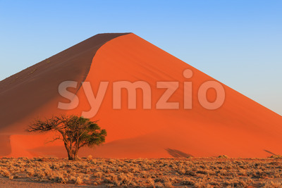 Spectacular red sanddune close up sunset Sossusvlei Stock Photo