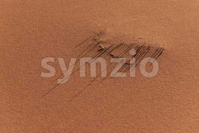 Small patch of grass on a sandy surface Stock Photo