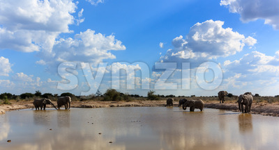 Elephants the gathering Stock Photo