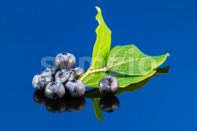 Blueberry on blue background with leaf Stock Photo
