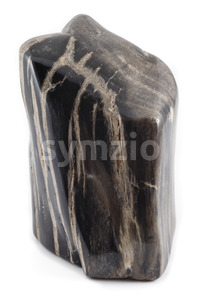Petrified wood ancient piece black angle Stock Photo