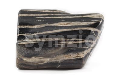 Petrified wood ancient piece black on side Stock Photo