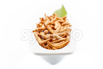 Healthy mealworms close up with decoration Stock Photo