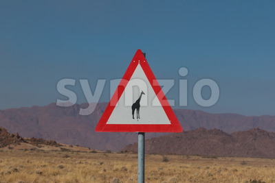 Roadsign giraffe crossing in africa Stock Photo