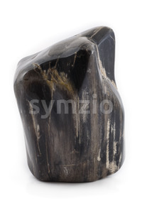 Petrified wood ancient piece black front Stock Photo