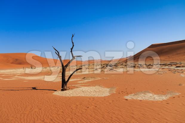 Dead tree deadvlei valley Namibia Stock Photo
