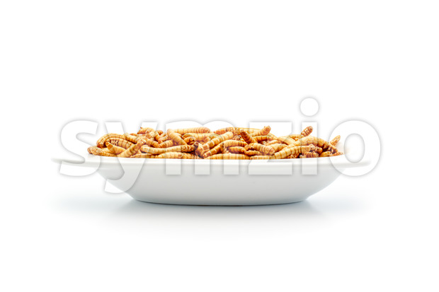 Healthy mealworms on small plate Stock Photo