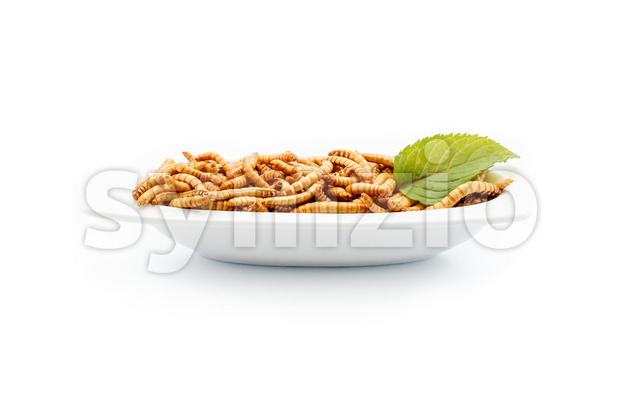 Healthy mealworms on white plate with decoration Stock Photo