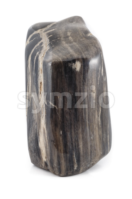 An ancient piece of petrified wood in black and white. The texture shows the structure of the tree.