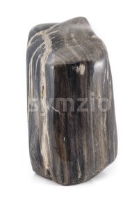 Petrified wood ancient piece black sideview Stock Photo