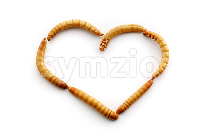 Love mealworms Stock Photo
