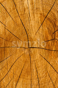 Texture cut tree trunk Stock Photo