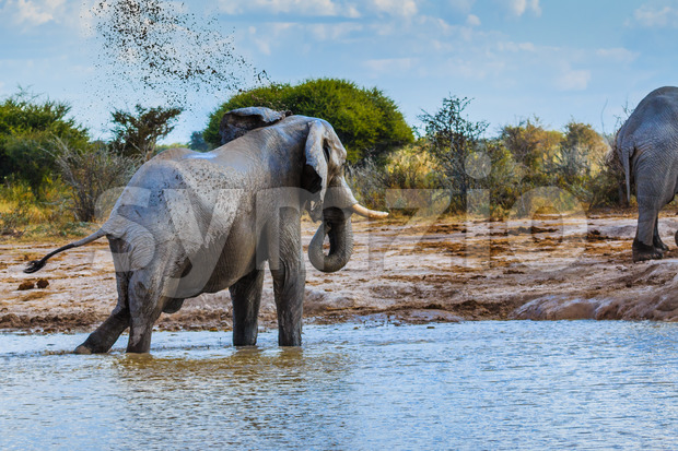 Elephant throwing dirt Stock Photo