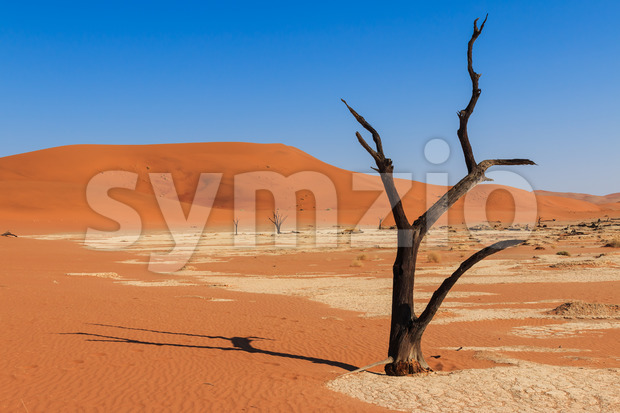 Close up tree deadvlei valley Namibia Stock Photo