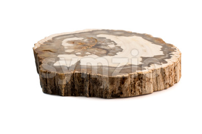 Petrified wood Madagascar flat isolated white Stock Photo