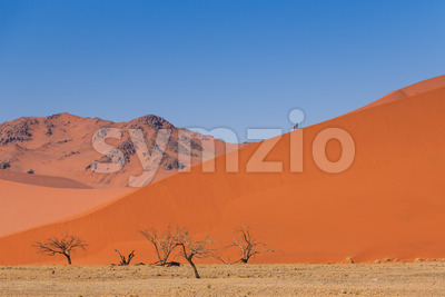 Sand dune dead trees people climbing Namibia Stock Photo