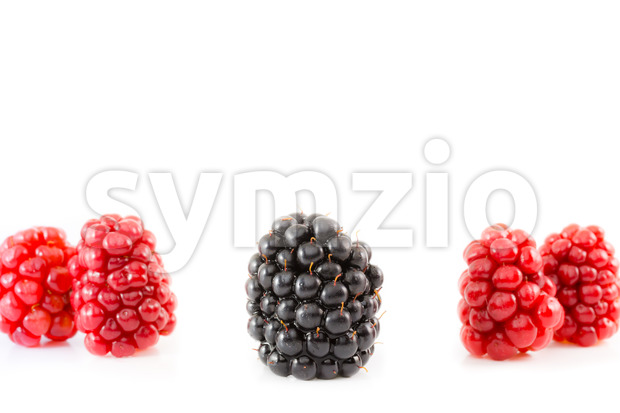 Ripe and unripe blackberry being different Stock Photo