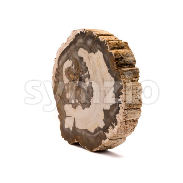 Petrified wood Madagascar side isolated white Stock Photo