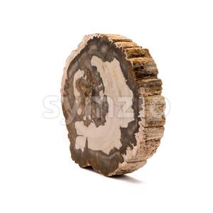 Petrified wood Madagascar side isolated white Stock Photo