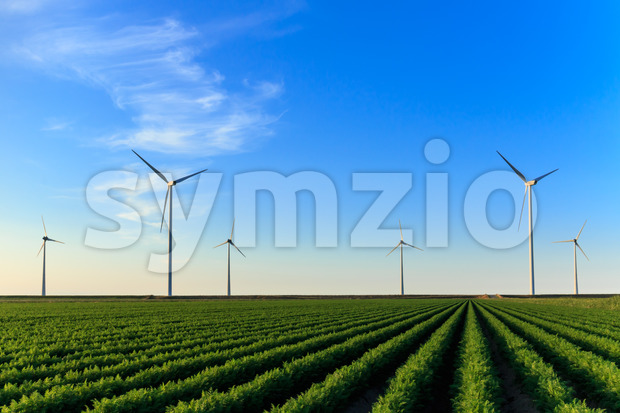 Windmills at sunset at a field of crops in Eemshaven, The Netherlands.