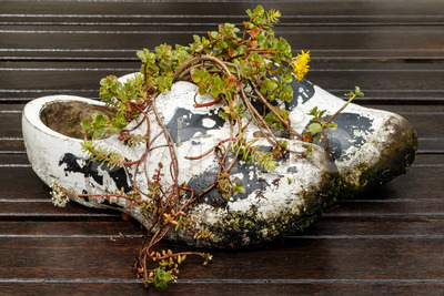 Old Dutch wooden shoes used as flowerpot Stock Photo