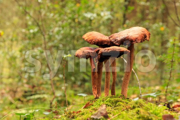 Brown mushroom close up in forest Stock Photo