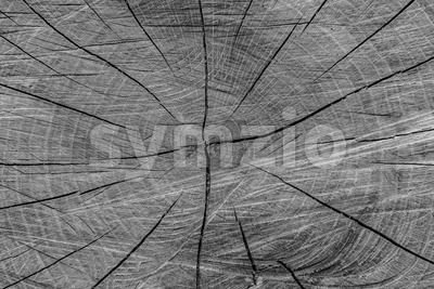 Texture gray oak trunk Stock Photo