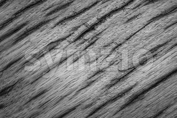 Gray texture very old oak wood Stock Photo
