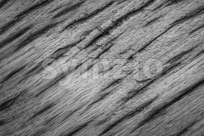 Gray texture very old oak wood Stock Photo