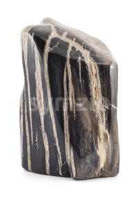 Petrified wood ancient piece black lines Stock Photo