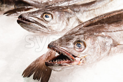 Fresh fish in market Barcelona Stock Photo