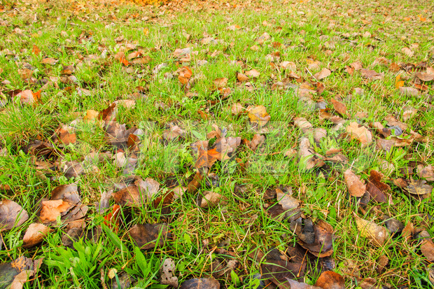 Leaves on grass in autumn at the end of summer Stock Photo