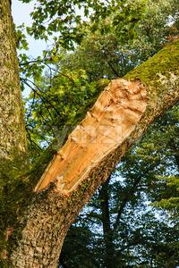 Branch tree broken by storm Stock Photo