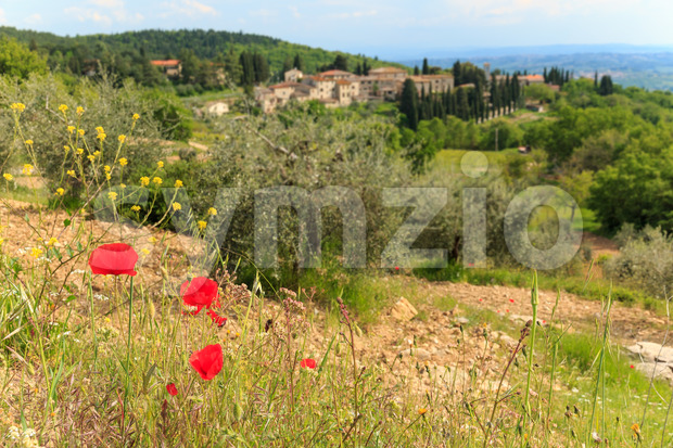 Poppy flower in Italian Tuscan landscape Stock Photo