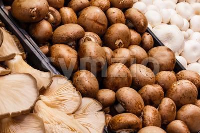Several mushrooms market Stock Photo