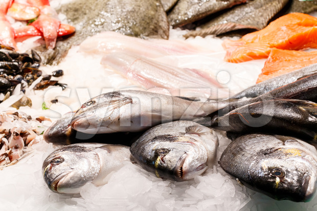 Fresh dorade fish market Barcelona Stock Photo