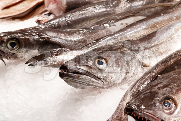 Fresh fish in market Barcelona Stock Photo