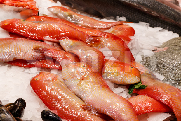 Fresh red fish in market Barcelona Stock Photo