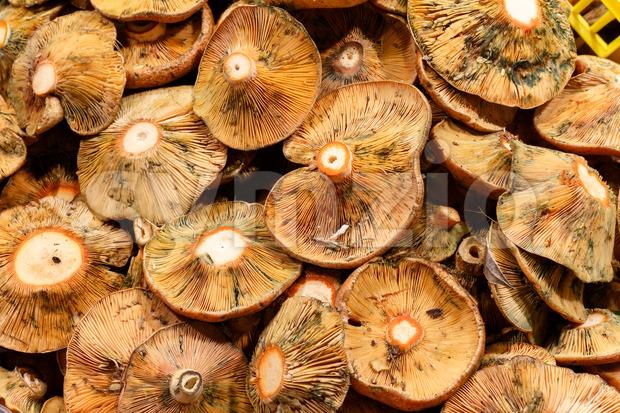 Fresh mushroom close up on mercat de la boqueria Barcelona, Spain
