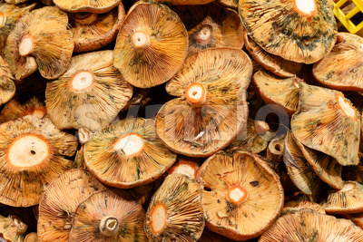 Close up mushroom food market Stock Photo