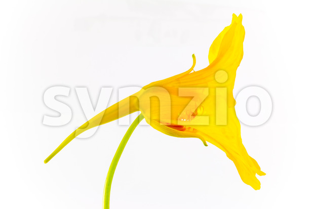 Artistic yellow flower Stock Photo